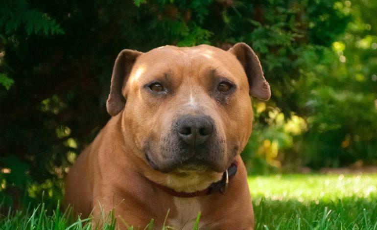 Nowe mandaty dla właścicieli psów. Nawet 500 zł za spacer