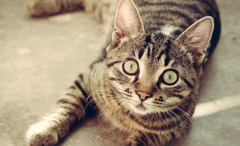 W Nowej Wsi wysterylizują i wykastrują wolno żyjące koty